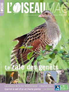 Découvrez le sommaire de L'OISEAU MAG n° 109 - Hiver 2012.
