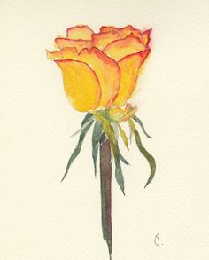 A Posy of Roses 4 different Handmade Watercolour Cards