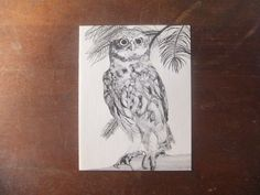 Owl Note Cards 1970's Little Owl Long Eared by VintageRetrievers