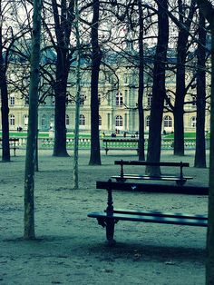 Luxembourg Gardens, Paris in the fall. Love the symmetrical starkness of the chestnut trees.