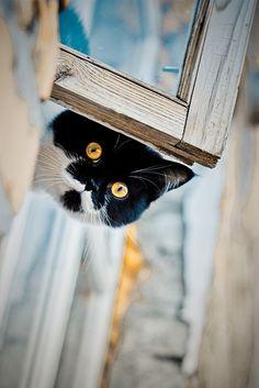 black & white cat ~ what?? >^..^