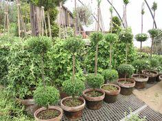 Henhurst Interiors: Topiary Nirvana