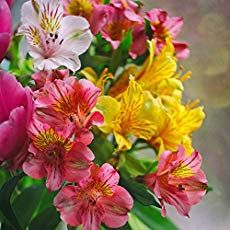A collection of favorite perennial flowers for the garden: unfussy, long lived and year after year pump out foliage and flowers. Flowers Perennials, Planting Flowers, Flowering Plants, Lilly Plants, Peruvian Lilies, Flower Seeds, Pink And Gold, Tiger Lilies, Bloom