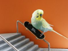 your dash could use some BIRDS ON SKATEBOARDS!!