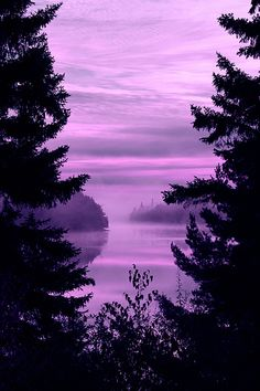 Purple Forest - can't my whole world just be different shades of purple??  from periwinkle to lavender to deep dark purple!!