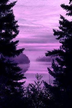 purple haze | purple and purple sky