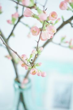 quince blossom | Flickr - Photo Sharing!