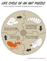 preschool/kindergarten ant unit