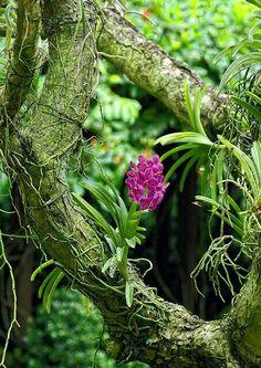 """""""Estava pronta para cortar o galho aparentemente morto da planta quando eu vi, preservado, lá num lugarzinho dele, um cacho pequenino de folhas muito verdes, muito novas... Incrível como a aparente morte de algumas coisas pode  atrapalhar a nossa percepção do nascimento de outras"""".  Ana Jácomo"""