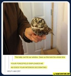 The owls face XD
