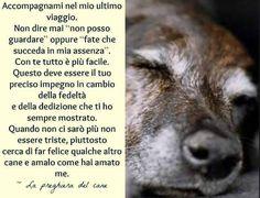 Preghiera del cane  .