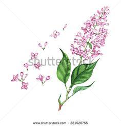 watercolour lilac drawing - Google Search