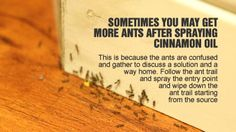 "ANTS HATE CINNAMON: To DETER Ants:use cinnamon(ground or essential oil) ""They don't like the smell, so either sprinkle ground cinnamon or rub oil near the openings where they come into the house;they won't cross over it.  NOTE: TERMITE ISSUES OUTSIDE! ANTS: are natural TERMITE PREDATOR-key:not getting rid of all ants on property. Work to keep ants under control & out of the kitchen. Can still survive outside your home and hopefully help you keep termites out wood piles."""