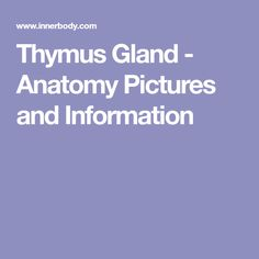 Learn all about the thymus gland - its location, anatomy, functions and importance in our immune system. Immune System, Anatomy, Pictures, Image, Photos, Photo Illustration, Anatomy Reference, Resim, Clip Art