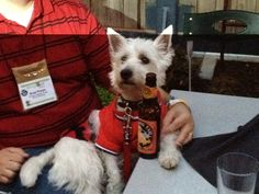 @PrestonSpeaks.com A Blog From a Dog's Point of View - and he enjoys @squatterspubs Chasing Tail beer!