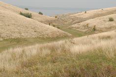 Bugeac-Garlitsa Lake