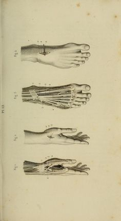 Plate 12. Hands and feet. Illustrated manual of operative surgery and surgical anatomy, 1855 (https://www.pinterest.com/pin/287386019949720406/). Bernard, Claude, 1813-1878 (https://www.pinterest.com/pin/287386019945557319/); Huette, Ch. (Charles); Van Buren, W. H. (William Holme), 1819-1883; Isaacs, C. E. (Charles Edward), 1811-1860. Source: archive.org