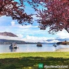from with … Wanaka blossums 🌸 . Capital Of New Zealand, Wanaka New Zealand, New Zealand Holidays, Lake Wanaka, South Island, Tour Guide, Snow Travel, Vacation, Explore