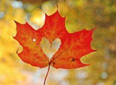 Yaprak içinde kalp | Leaf inside heart