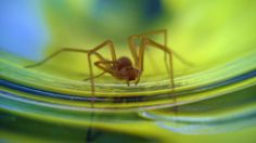 Spider Yoga