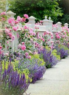 Valla con rosas trepadoras