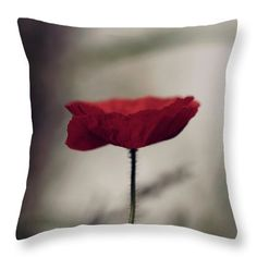 Poppy Throw Pillow featuring the photograph Pop Of Colour by Helen Kelly Michael Cole, Color Show, Colour, Pillow Reviews, Pillow Sale, Mothers Love, How To Be Outgoing, Colorful Backgrounds, Poppy