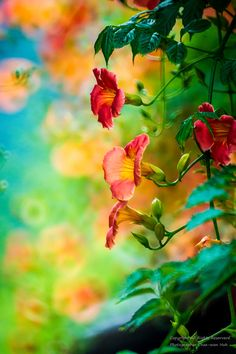 trumpet creeper by Chae-won Huh on 500px.com