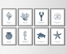 From Etsy seller BySamantha: Nautical Sea Life, Set of 8 Art Prints, Navy Blue Scientific Beach Species: Conch Shell, Seahorse, Coral, Sand Dollar.