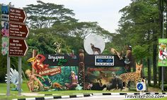 Cool The Wonder Behind Singapore Zoo | Swiss Hotel Singapore picture #Singapore #Zoo