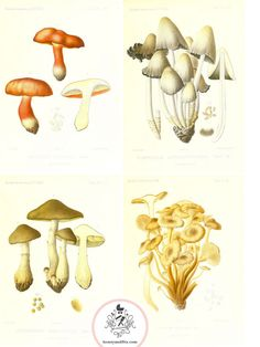 Honey-and-Fitz-Free-Printable-mushrooms