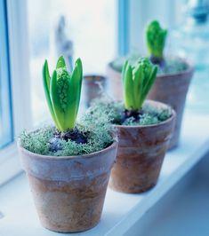 Planter Pots, Presents, Ornaments, Plants, Christmas, Gifts, Xmas, Navidad, Favors