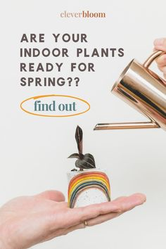 Are you indoor plants ready for Spring? In just 3 easy steps, your houseplants will be prepped and ready to grow big and strong! Clever Bloom #indoorplants #indoorplantcare