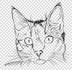 Cat Sketch, Drawing Sketches, Animal Sketches, Animal Drawings, Cat Face Drawing, Black Cat Drawing, Cat Pen, Tiger Paw, Art Prompts