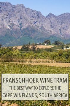 The Franschhoek wine tram is the best way to wine taste in the Cape Winelands near Cape Town, South Africa without having to drive. You can hop-on and hop-off the tram/bus when you wish and visit up to six wineries a day. Click through for more details ab
