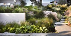Nice mix of grasses, hardscape and perennials.