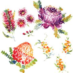 Australian Flora by Charis Harrison, via Behance