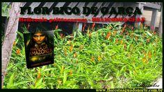 Amazônia - Flor da Mata - Bico de Garça - Heliconia psittacorum - Celcoi...
