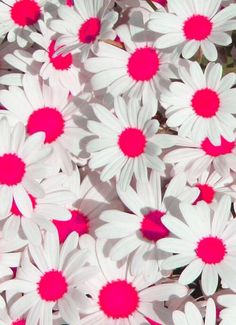white and hot pink flowers<3