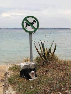 Love this rebel