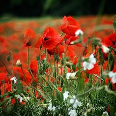 """""""Respect and remembrance on #armistice day #myfrenchcountryhome"""""""