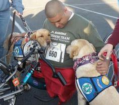 Warrior With PTSD Dog