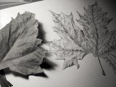 Drawing. Desenho a grafite de folha de plátano