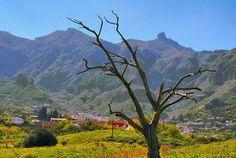 Spain, Canarias, Gran Canaria, Vega de San Mateo