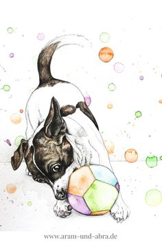 Hund, Zeichnung, Jack Russell Terrier, Aquarell, Tierportrait nach Foto, Aram und Abra