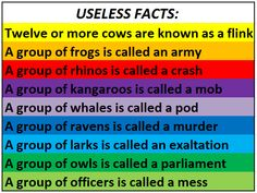 Useless Facts...it's funny how owls are a parliament and officers are a mess!!