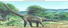 Brachiosaurus --- Site officiel : http://www.dinosauria.ca/