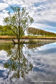 Solitary tree on a tiny island in Biesbosch National Park, near Dordrecht, The Netherlands.