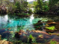 The cleanest fresh water in the world coming from Waikoropupu Springs (aka: Pupu Springs.)   The irony never gets old.