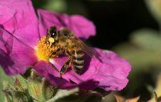 Bee - null