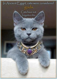 Centuries ago, Egypt considered cats royalty.  The cats still think they are!